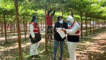 AGAP y Sunafil se unen para capacitar a productores agrarios en normas sociolaborales, de seguridad y de salud