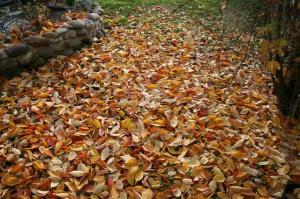 foglie-davanti-casa-300x199
