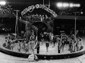Circo Nacional de Cuba: Identidad y espejo de cubanía