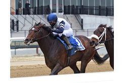 Funny Guy wins the New York Stallion Series Stakes Thunder Rumble division at Aqueduct Racetrack