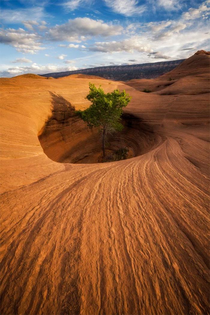 Жизнь дерево, живучесть, жизнь, мир, планета, растительность, фото