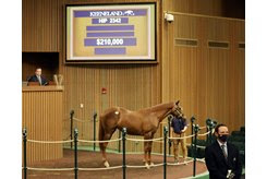 The Ghostzapper filly consigned as Hip 2342 in the ring at the Keeneland September Sale