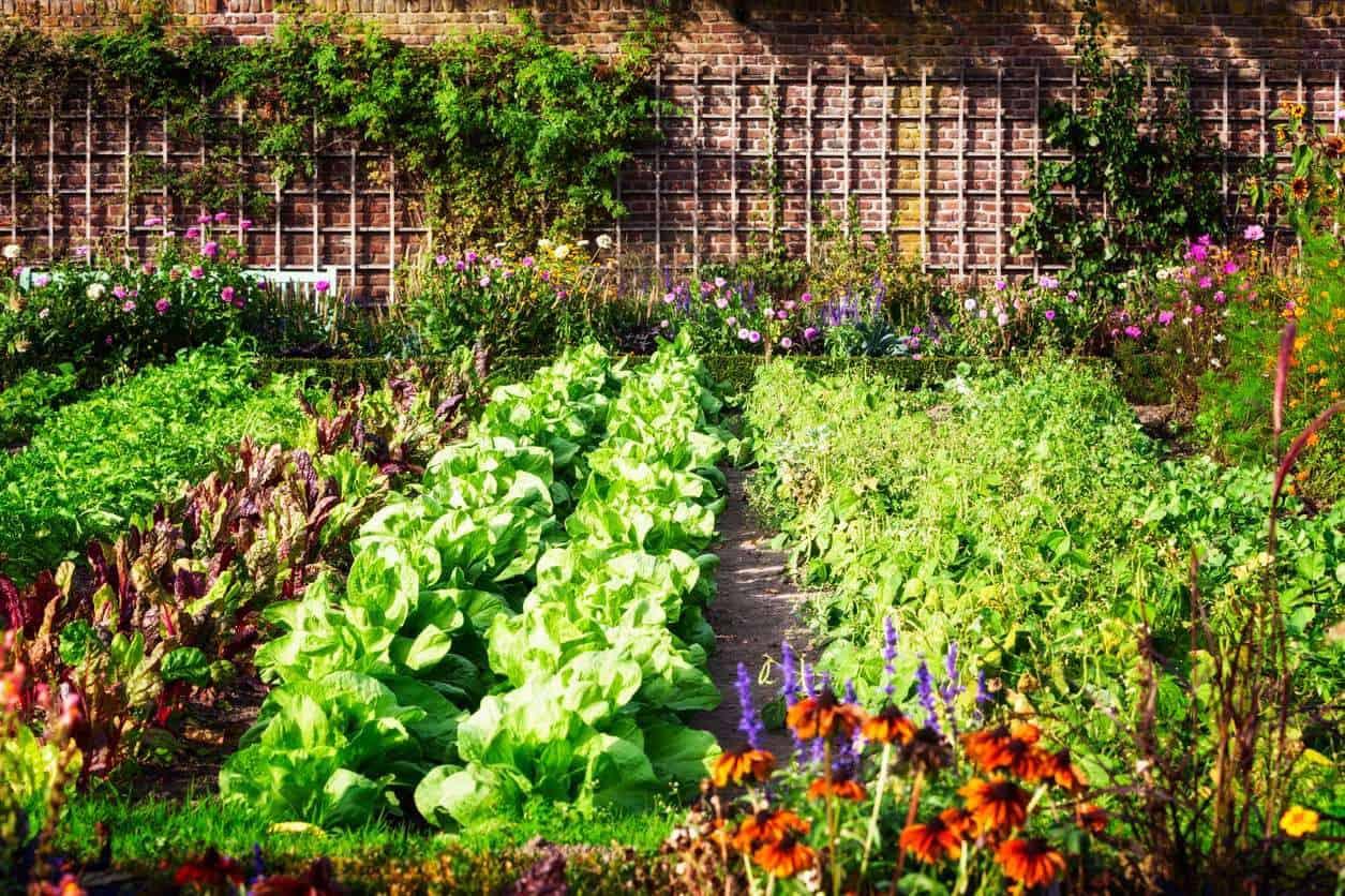 3 consejos para cuidar nuestro huerto ecológico en invierno