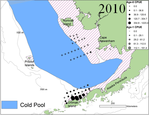 Cold Pool 2010