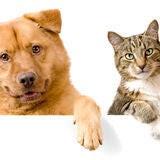 Cão e gato acima da bandeira branca