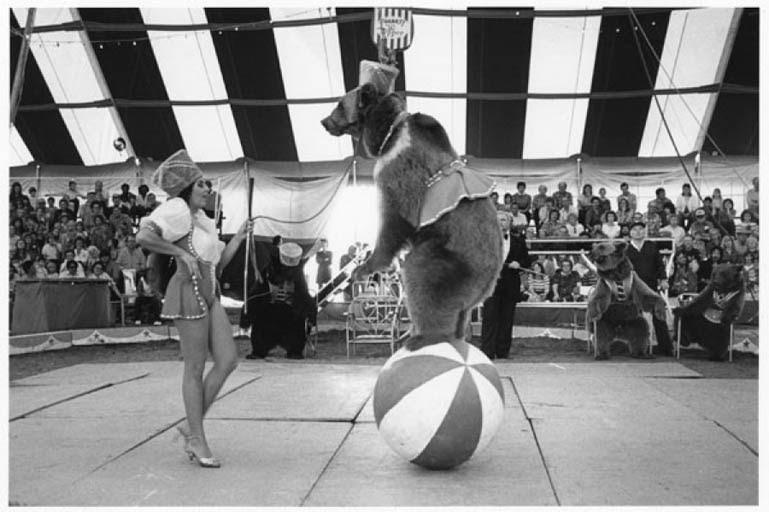 essays on dancing bear