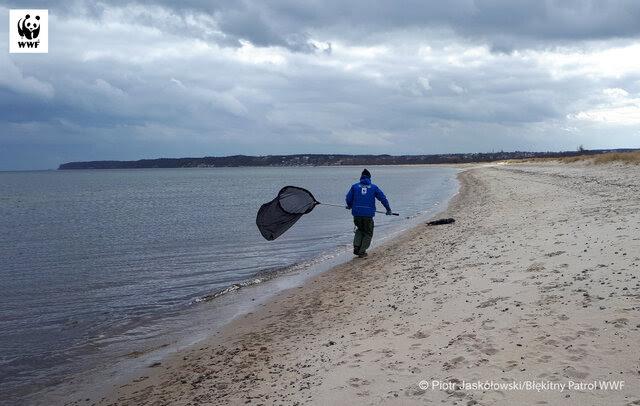 Interwencja Błękitnego Patrolu WWF