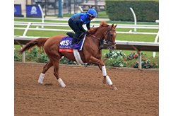 Wuheida prepping before her victory in the 2017 Breeders' Cup Filly and Mare Turf at Del Mar