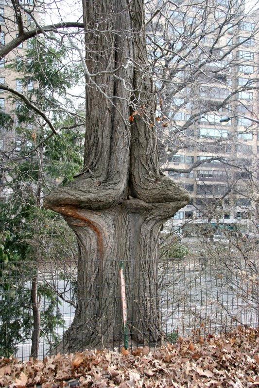 trees, 14
