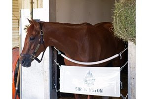 Sir Winston the morning after his Belmont Stakes win at Belmont Park
