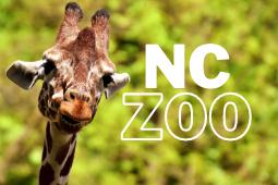 go open nc zoo