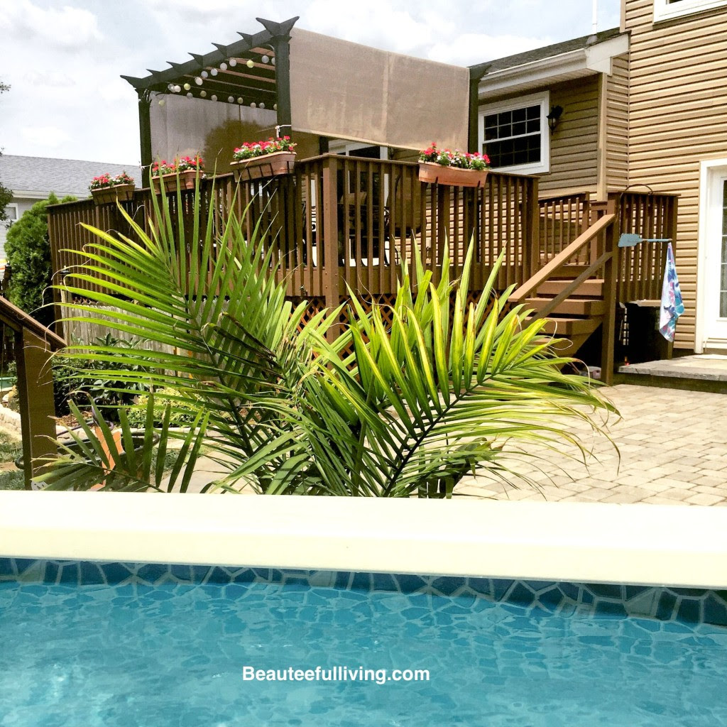 Backyard view - Beauteeful Living