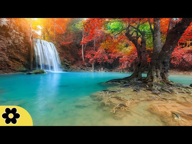 Healing Music, Relaxation Music, Chakra, Relaxing Music for Stress Relief Sddefault