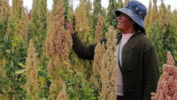 """""""Es vital impulsar la exportación de quinua con valor agregado"""""""