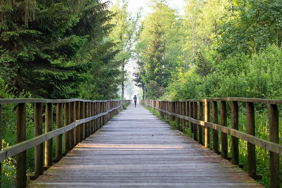 HD wallpaper: away, sport, health, jog, jogger, nature, morning ...