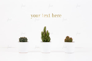 Cacti on white, photo-based mockup ♥