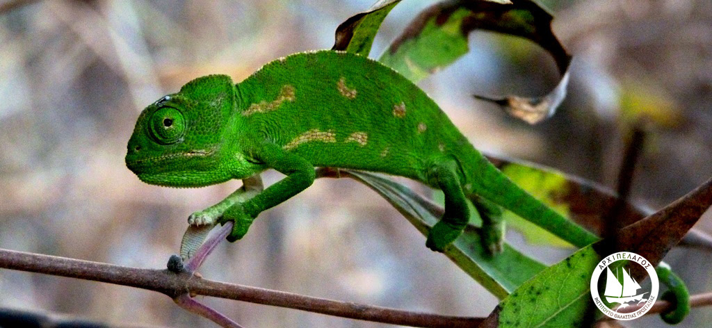 chameleonWakeUp