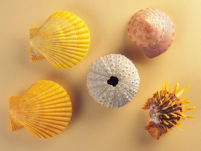 Tiếng sóng biển du dương của con ốc khi áp sát vào tai không phải được mang về từ đại dương mà chính là dòng chuyển động của tĩnh mạch trong tai bạn.
