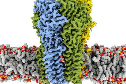 GABA receptor bound with propofol