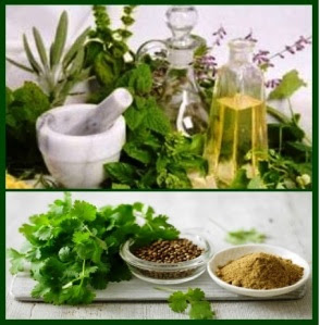 cilantro in medicine