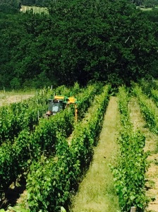 Trimming the vines