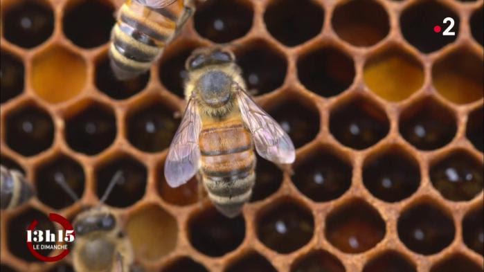 """VIDEO. """"Quand l'abeille va mal, l'homme va mal"""" : un apiculteur lanceur d'alerte en lutte continue contre les pesticides"""