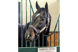 Pioneerof the Nile in his stall at WinStar Farm