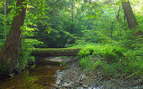 The Land and Water Conservation Fund helps maintain the Allegheny National Forest. (Nicholas A. Tonelli/Wikimedia Commons)