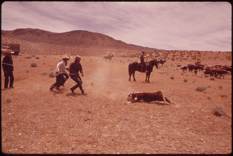 File:SPRING ROUNDUP OF PAIUTE-OWNED CATTLE BEGINS AT SUTCLIFFE PYRAMID LAKE INDIAN RESERVATION. CORALLING AND BRANDING IS... - NARA - 553108.jpg