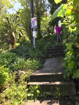 parkway-steps.jpg