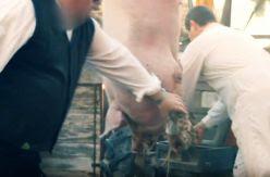 La fiesta del cerdo