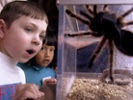 Smithsonian, PBS put free lessons online