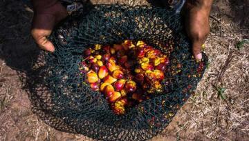 TotalEnergies dejará de utilizar aceite de palma para la producción de biocombustibles en el 2023