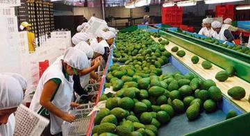 Agroexportaciones peruanas sumaron US$ 4.900 millones entre enero y agosto, mostrando un crecimiento de 18%
