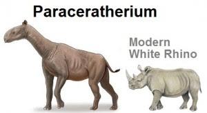 Paracatherium vs Modern Rhino