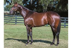 Uncaptured at Ocala Stud