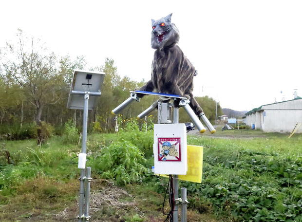 The ''Monster Wolf'' robot