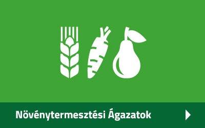 Növénytermesztési Ágazatok