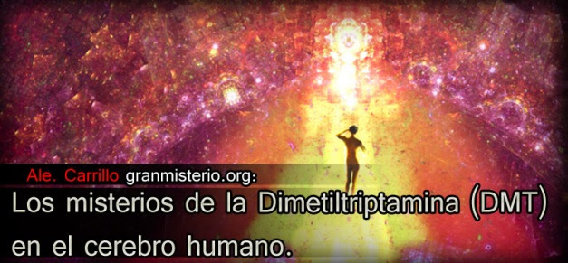 Los misterios de la Dimetiltriptamina (DMT) en el cerebro humano.