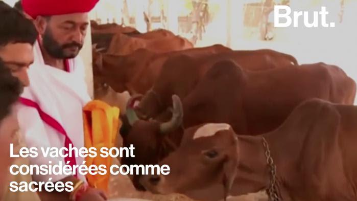 Inde : des musulmans lynchés pour avoir tué des vaches