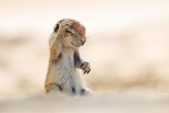 funny-comedy-animal-photography-awards-9jpg (700x466, 138Kb)