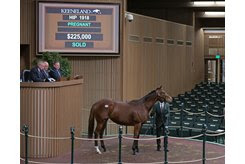 Holiday's Angel in the ring at the Keeneland November Sale
