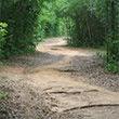 Marjorie Harris Carr Cross Florida Greeway bicycling trail