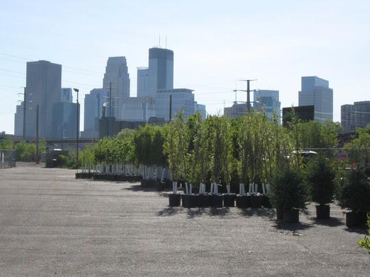 treelottery