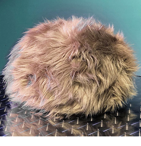 Star Trek App-Enabled Interactive Tribble