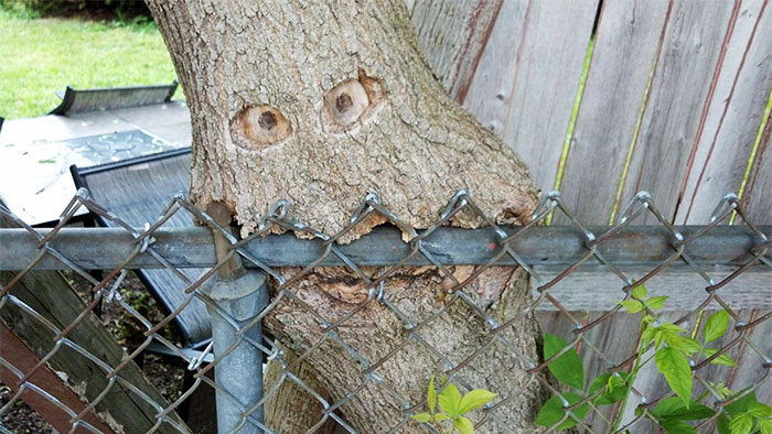My                                                          Sister's Tree                                                          Is Eating Her                                                          Fence