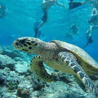 snorkeling di gili air lombok