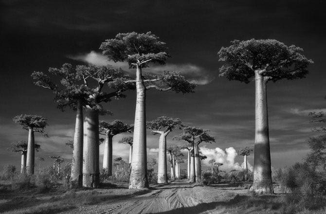 Hình ảnh Chiêm ngưỡng những loài cây hoang dã già cỗi nhất trên thế giới số 7