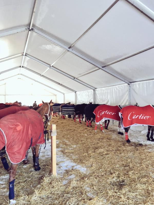 Horses for the championship finals getting their game faces on.