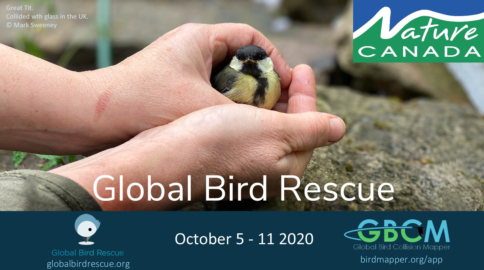 Global Bird Rescue